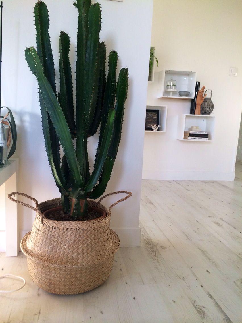 cache pot cactus