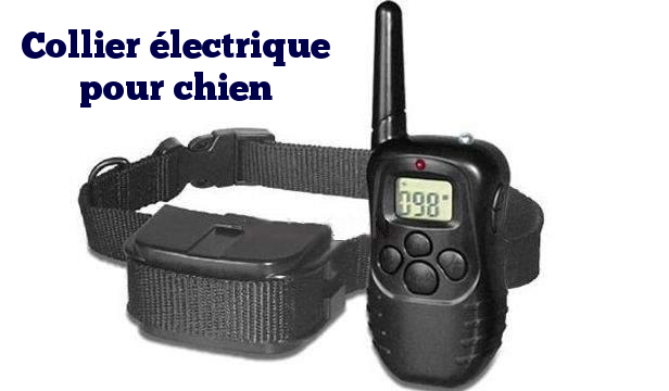 collier electrique chien
