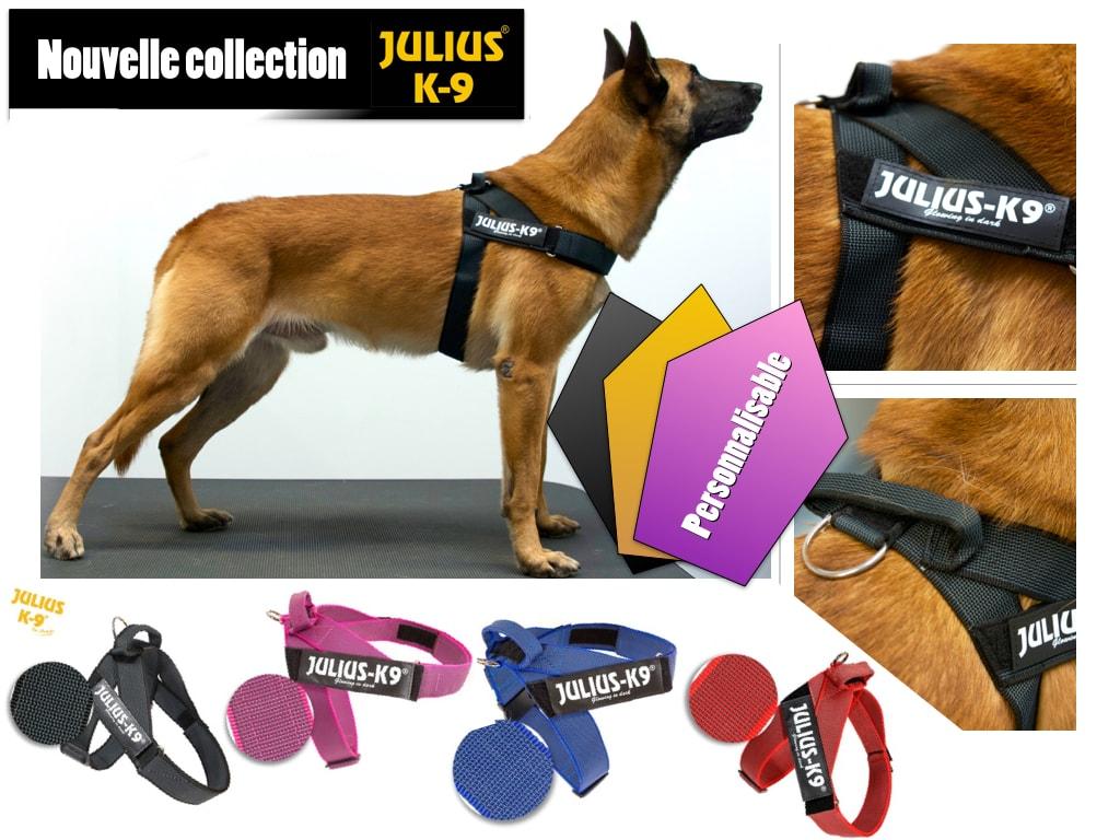 harnais chien julius