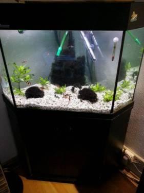 aquarium 150 liter