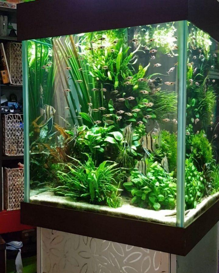 decoration pour aquarium