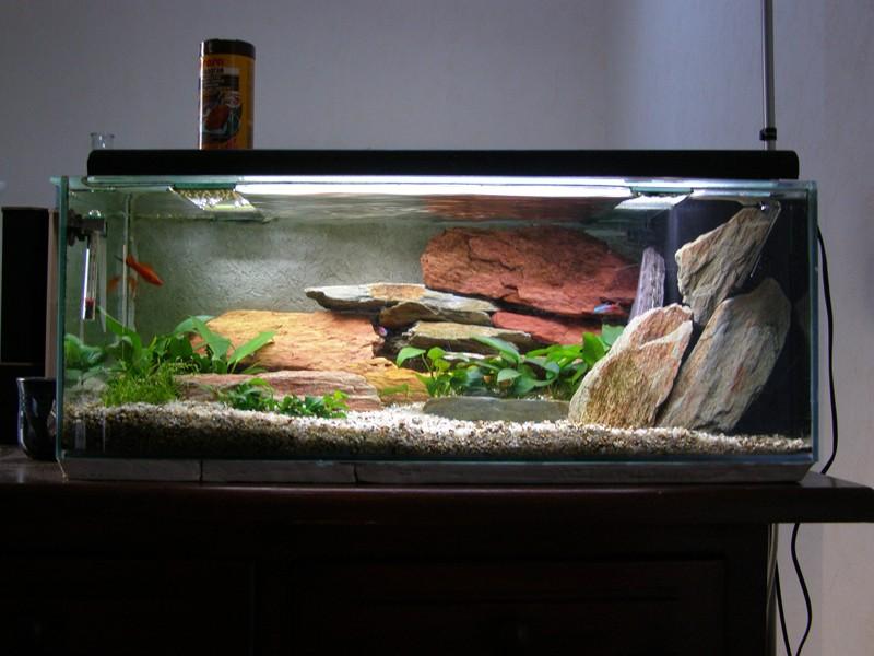 solde aquarium